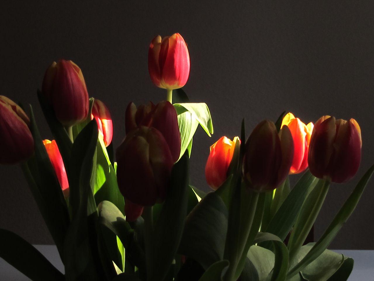 Blumengruss